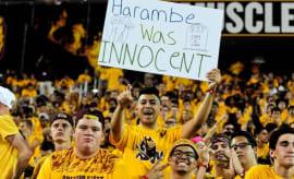 harambe-football-fans