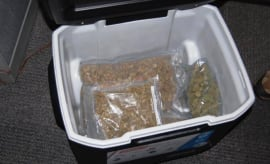 weed in a cooler