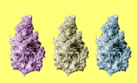 Your Guide to the Best Weed Strains Available Right Now