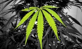 best-cities-to-smoke-marijuana-lead