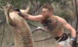 A mashup vid of Conor McGregor snotboxing a kangaroo.