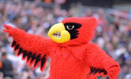 Louisville Cardinals mascot.