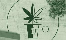 Blacks In Weed Lead