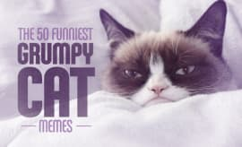 The 50 Funniest Grumpy Cat Memes