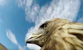 An eagle rocking a GoPro