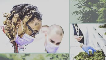 Collage of Wiz at Reef