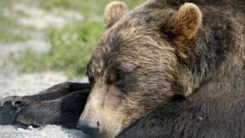 Look at this bear.