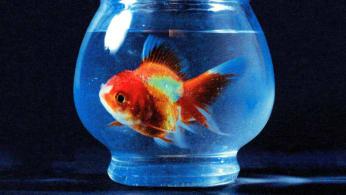 Vince Staples