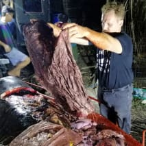 Whale found with 88 lbs. of plastic in its stomach