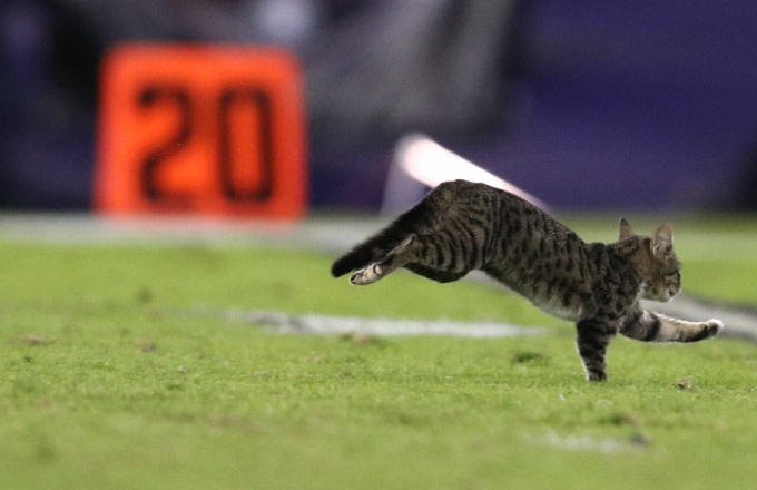Cat on the field during Dolphins/Ravens game.