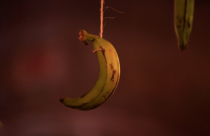 This is a photo of a banana.