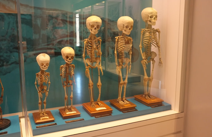 Skeletons of children from ages 3 months to 5 years.