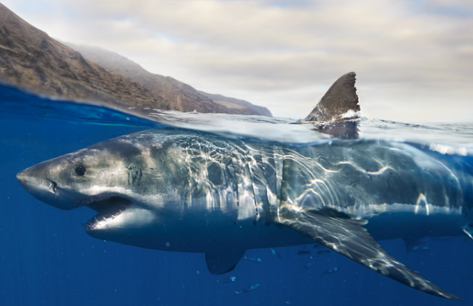 Shark for Sharknado