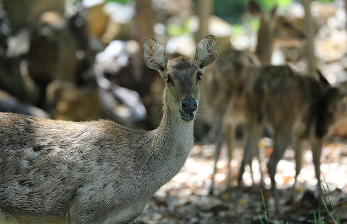 deers-chilling