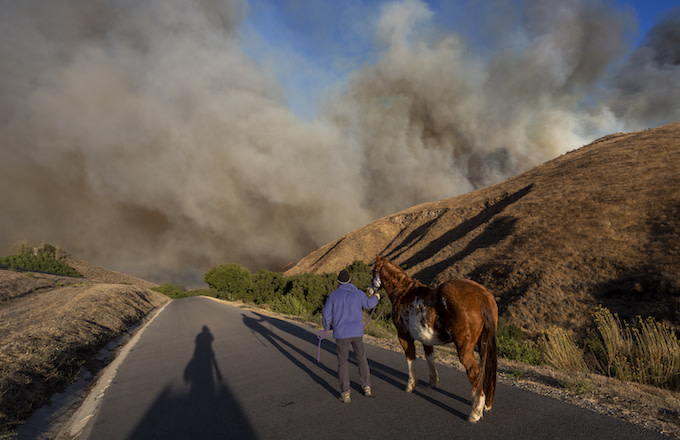 A man evacuates horses as the Easy Fire approaches.