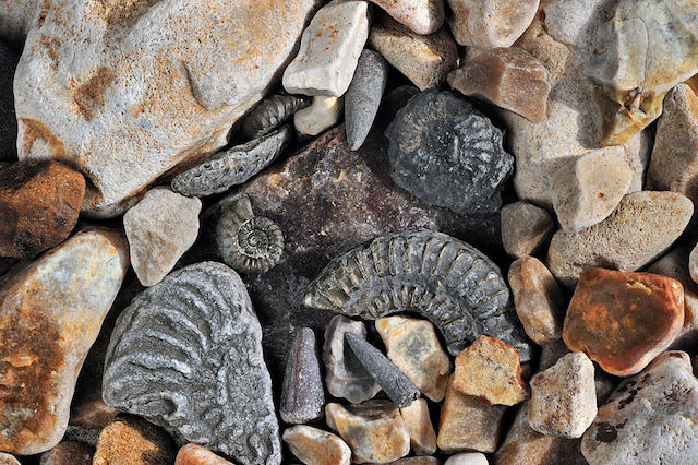 This is a picture of an ammonite fossil.