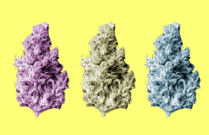 The Best Weed Strains Right Now | Complex
