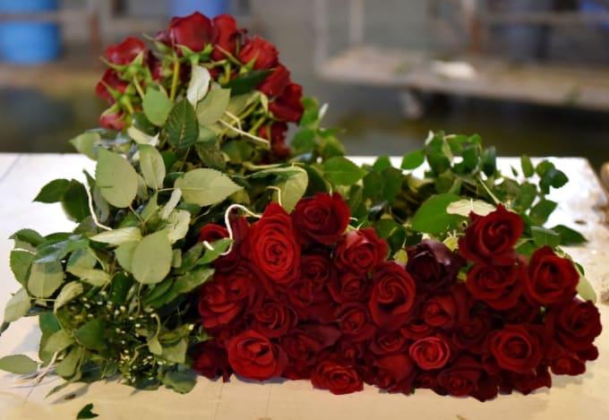 roses-valentines