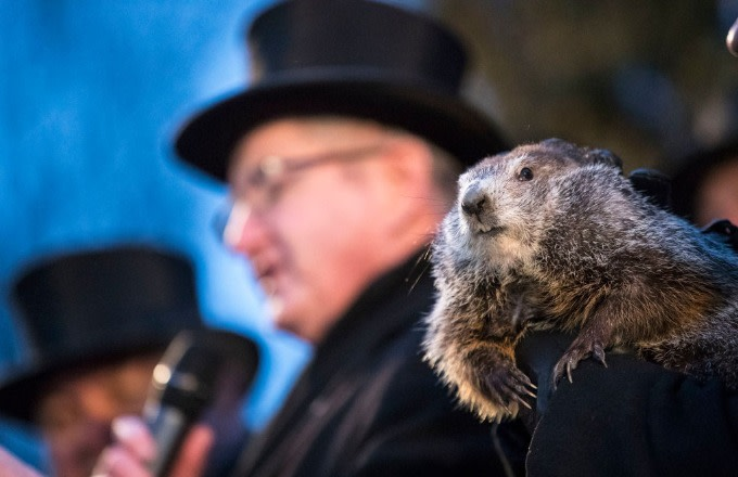 PETA Calls for Punxsutawney Phil to Be Replaced by Animatronic Groundhog
