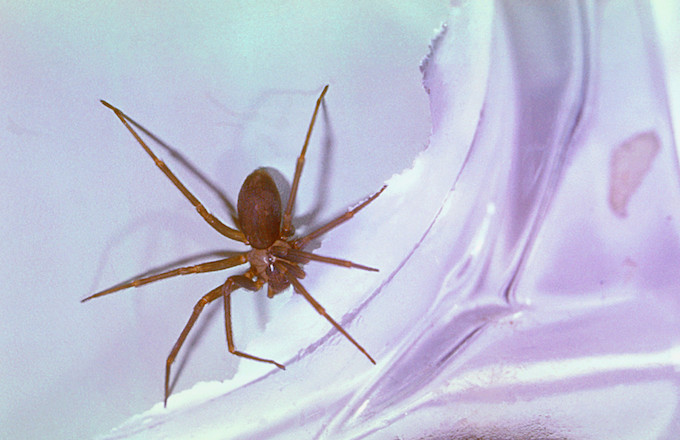 Venomous Spider Discovered in Woman's Ear When She Went to Doctor's Office