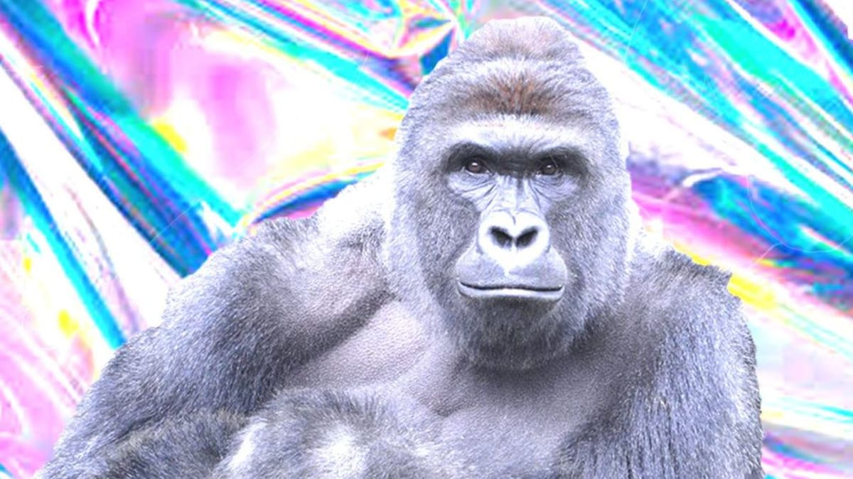 Harambe Hologram Will Make Appearance at Day For Night Festival